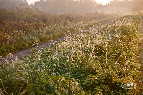 Biesbosch Polder Malta Herfst