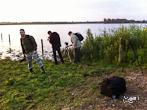 Dauwtrappen in de Biesbosch