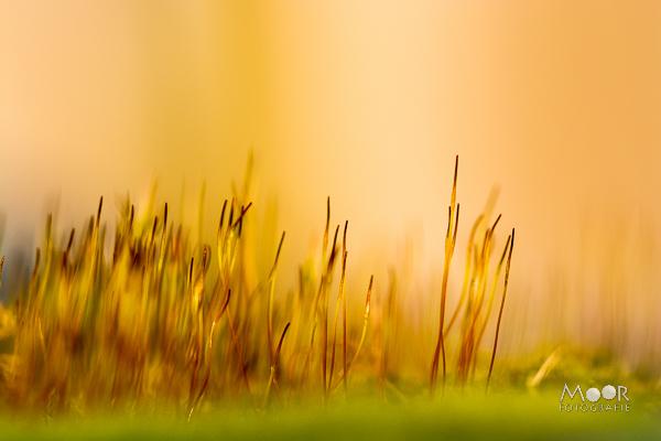 Fotograferen in het Gouden Uur