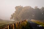 Fotograferen na de mist in de Biesbosch