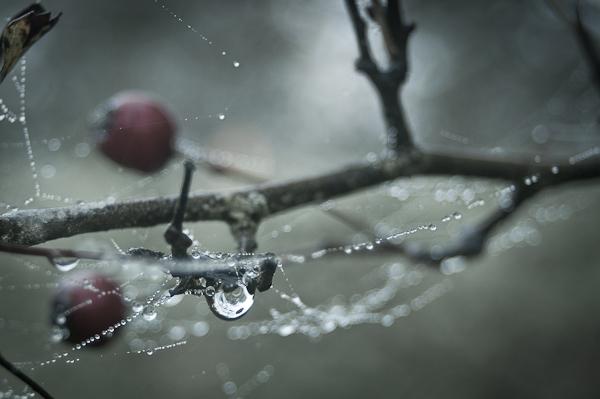 Herfst Herfstfotografie HDR Kleuren Druppels