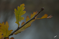 Herfst Herfstfoto Bewerken Adobe Lightroom