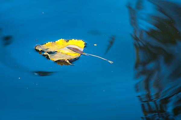 Herfst Herfstfotografie Tips