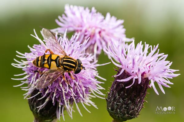 Insecten genoeg!