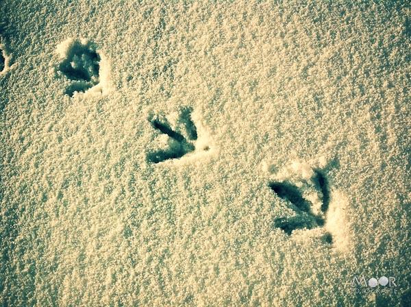 winter sneeuw iPhonografie iPhone voetstappen