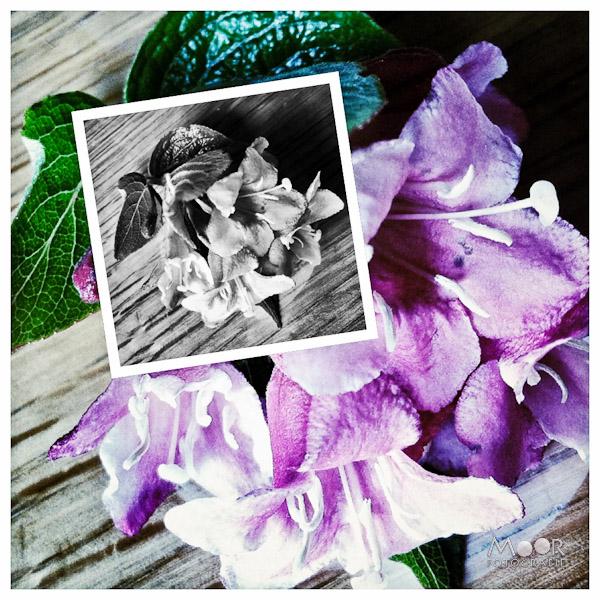 iPhonografie iPhone Foto Bloesem