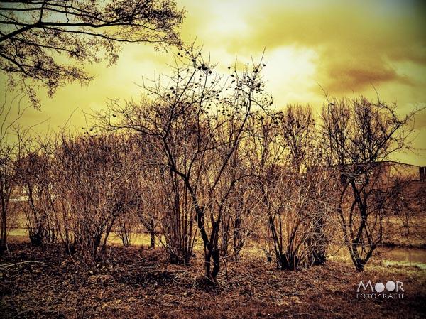 iPhonografie Winterlandschap