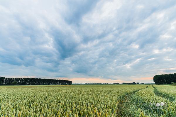 Landschapsfotografie en natuurlijk licht