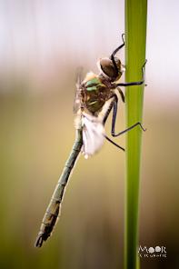 Macro Natuur Fotografie