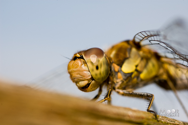 Macrofotografie Tips Insecten Fotograferen