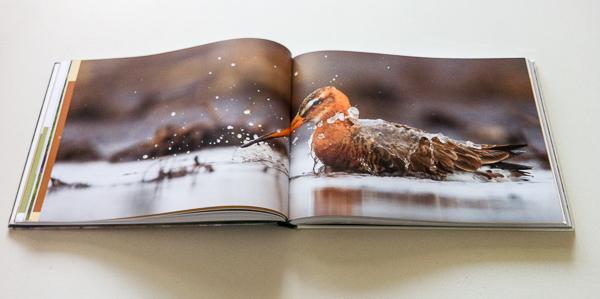Review boek Koekoek! Delta Vol Leven