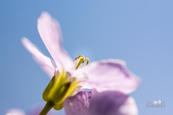 Het Voorjaar Fotograferen!