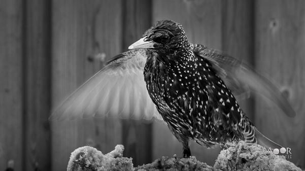 De Wondere Wereld van High Speed Wildlife Fotografie