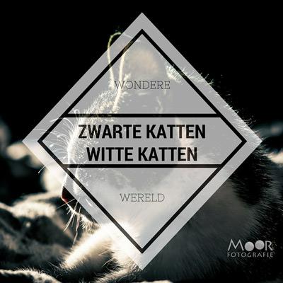 De Wondere Wereld van Zwarte Katten en Witte Katten
