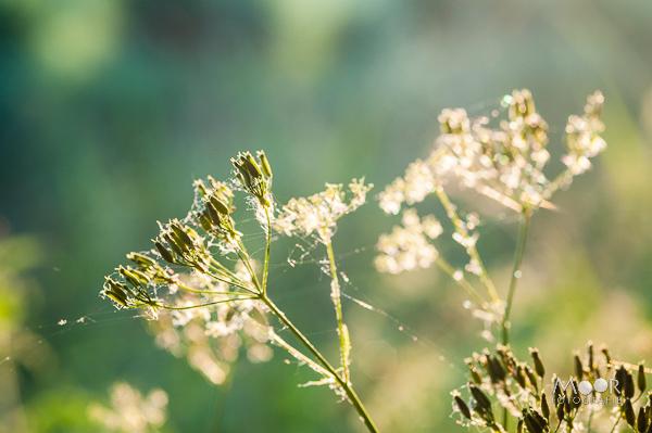 Woordloze Woensdag Heerlijk voorjaar