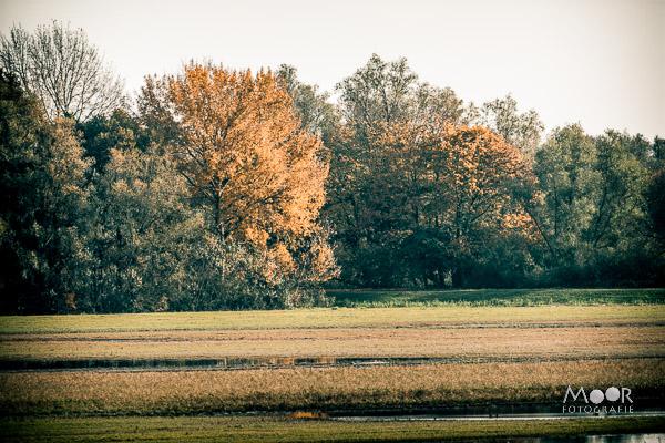 Woordloze Woensdag Einde Herfst Biesbosch/></noscript> <span class=