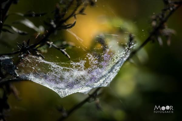 Woordloze Woensdag Kleuren Herfst Spinnenweb/></noscript> <span class=