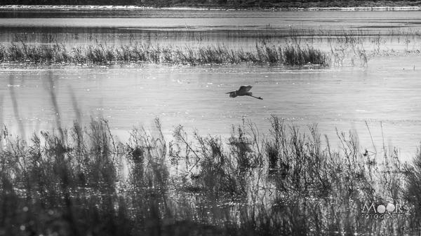 Woordloze Woensdag Biesbosch Landschap Water