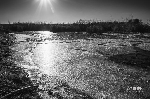 Woordloze Woensdag Landschap IJsvlakte Zwart-Wit Biesbosch