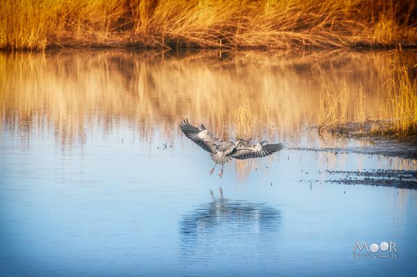 Woordloze Woensdag Natuur Landing Reiger Biesbosch