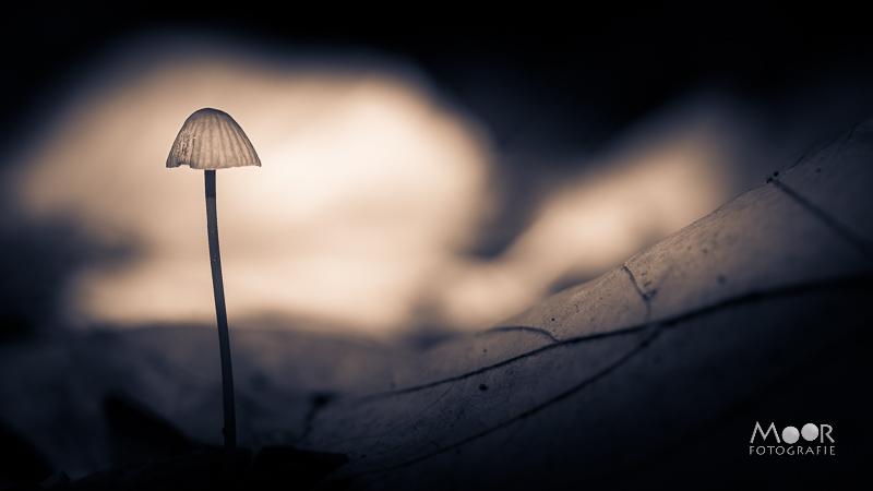Woordloze Woensdag Paddenstoel Paddo Licht