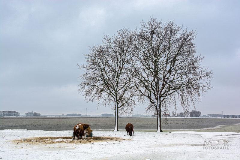 Woordloze Woensdag Winters Biesboschlandschap