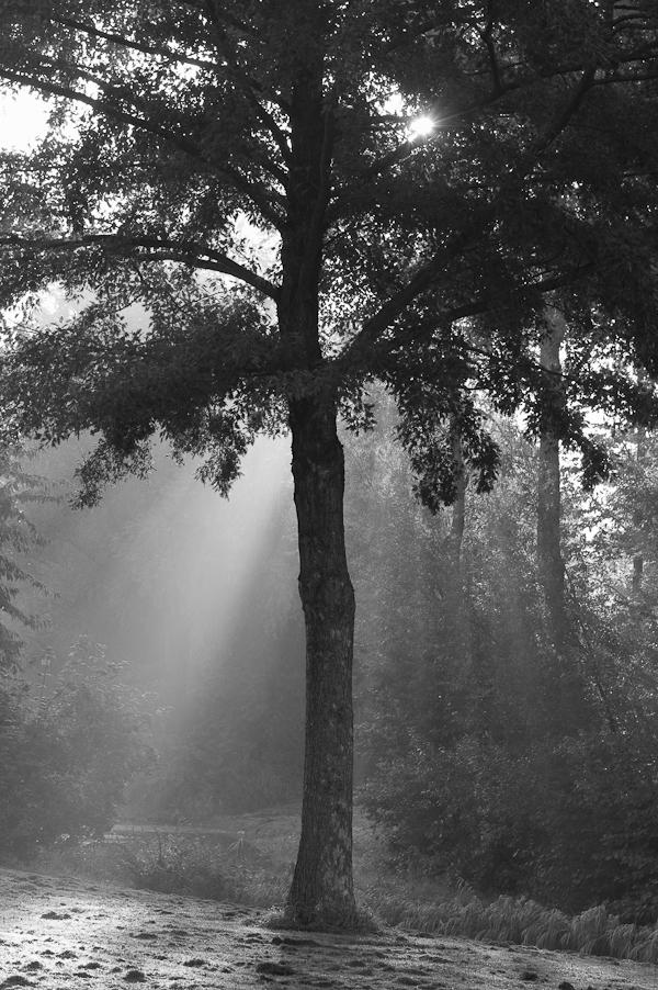 Woordloze Woensdag Zon Zonnestralen Ochtend Boom Zwart Wit Herfst Herfstlandschap