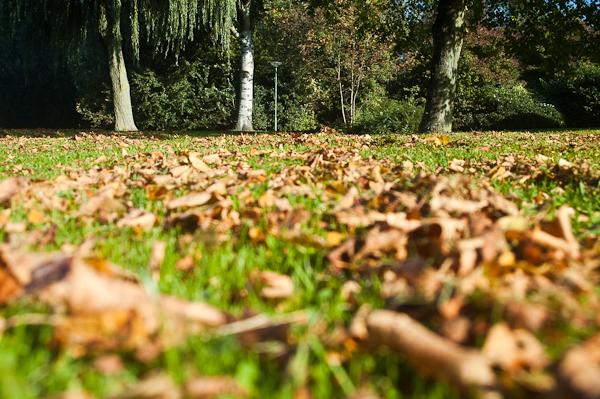 Woordloze Woensdag Herfst Herfstbladeren Bladeren Seizoen Herfstfotografie