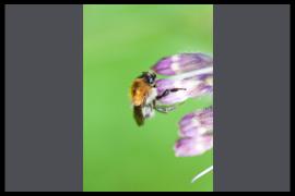 Resultaten Tim Titsing Fotowandeling Biesbosch