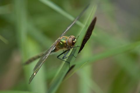 Workshop Macrofotografie Smaragdlibel
