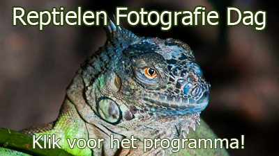 Workshop Reptielen Fotografie Dag