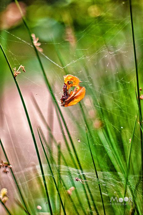 Herfstblad gevangen in een spinnenweb in het herfstige Mastbos te Breda
