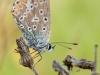 oogst-ons-vlinderveld-10