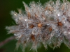 oogst-ons-vlinderveld-11
