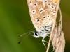 oogst-ons-vlinderveld-15