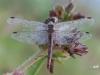 oogst-ons-vlinderveld-2