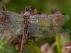 oogst-ons-vlinderveld-5