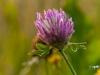 oogst-ons-vlinderveld-6
