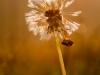 oogst-ons-vlinderveld-7