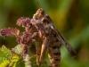 oogst-ons-vlinderveld-9