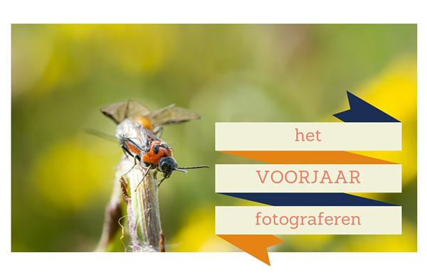 voorjaar-fotograferen-6